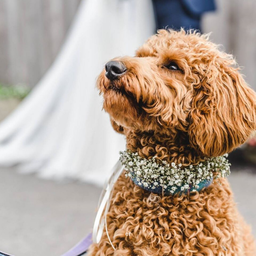 Short Legs Dog Care, Featured Image, Glenfall House, Cotswold Wedding Venue